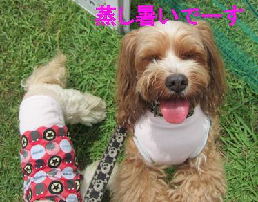 2011.7.18あつい~