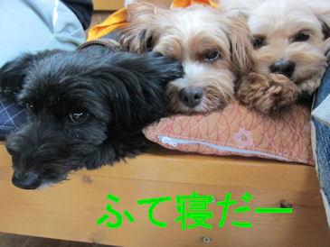 2011.7.31ふて寝