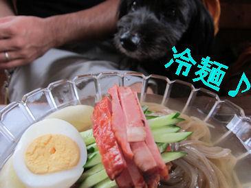 2011.7.31冷麺