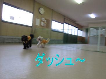2011.7.31だーっしゅ