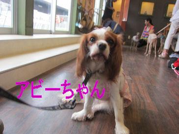 2011.7.31アビーちゃん
