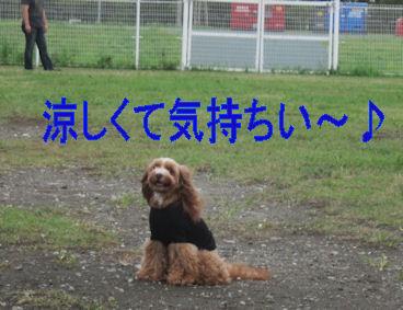 2011.8.20涼しくてきもちい~