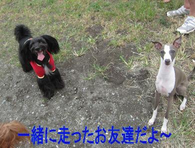 2011.8.20おともだち
