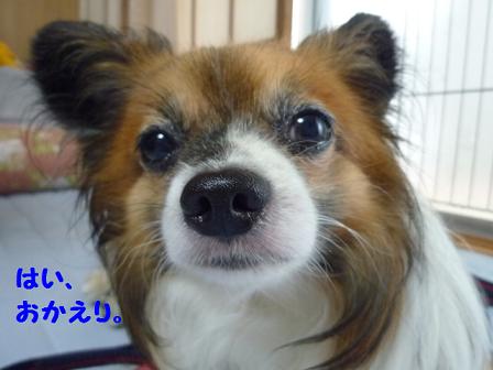2011夏☆お里-11