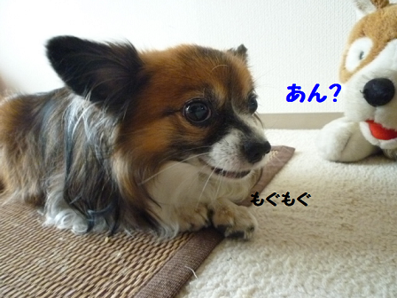 20111110-1.png