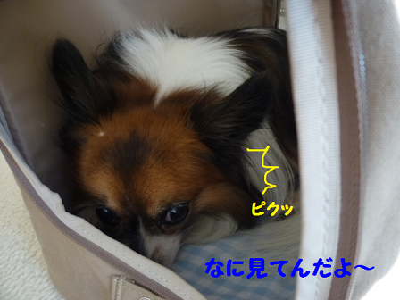 20111124-2.png