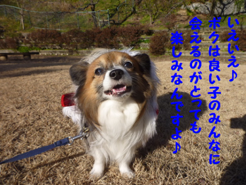 20111225-4.png