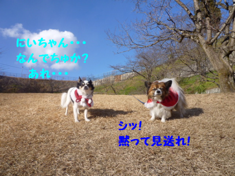 20111225-8.png