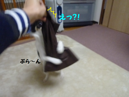 2011129-4.png