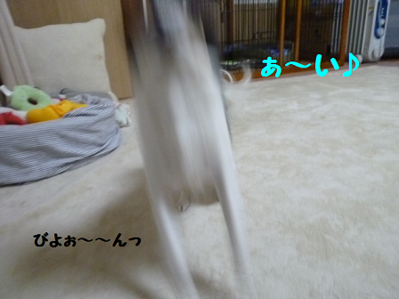 2011129-7.png