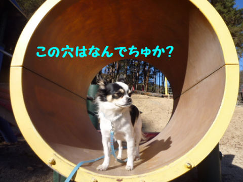2012112-5.png