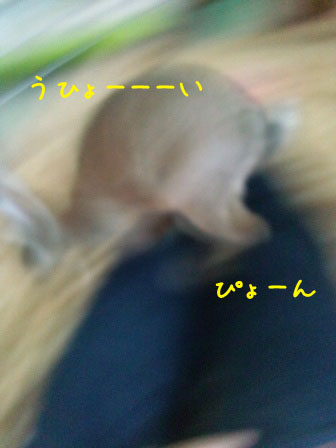 120201_110232ed.jpg