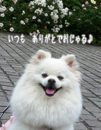 柳が崎6月 (2)
