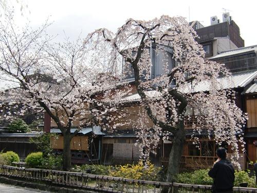 10.桜祇園白川他 (33)
