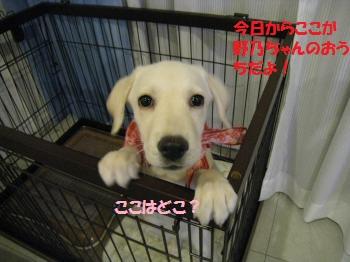 013_convert_20110807010024.jpg