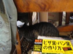 2013-12-02 ぬー 002