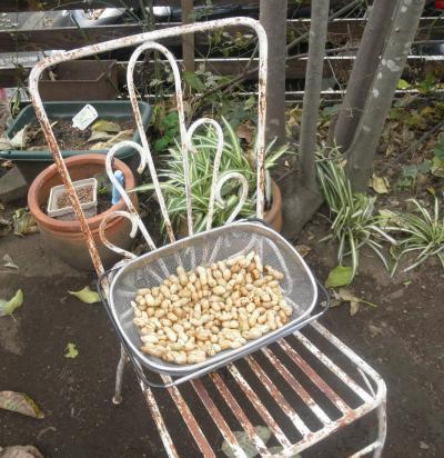 2011.10.23  60年前の椅子 ピーナッツ