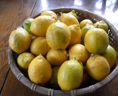 2012.01.23  檸檬