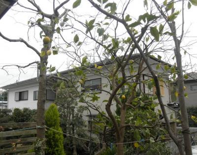 2012.01.23 庭の木