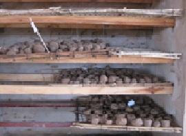 種イモ保管所