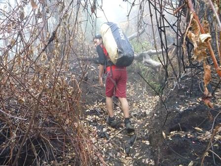 8月の山火事で35ヘクタール焼けた