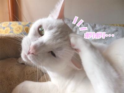 りぃな11121108
