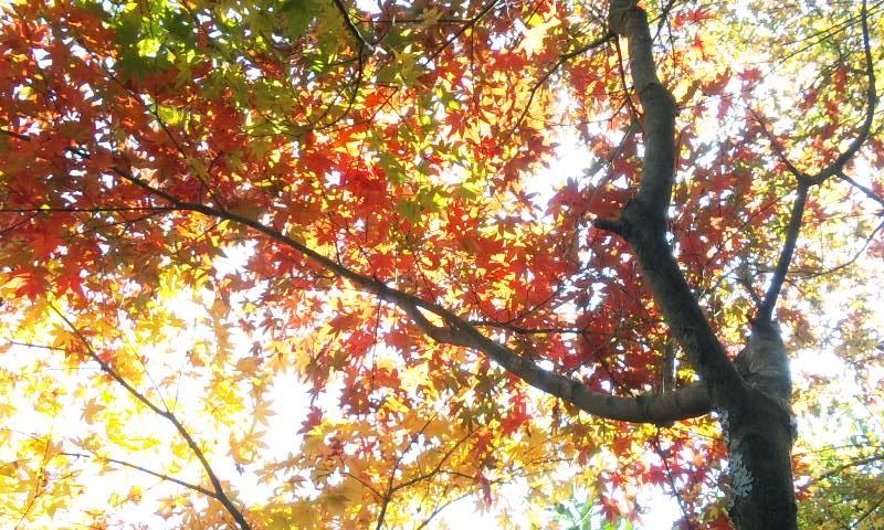 茶室紅葉.