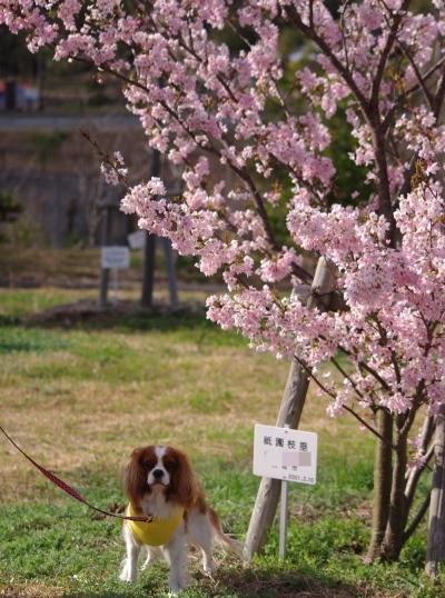 祇園枝垂と