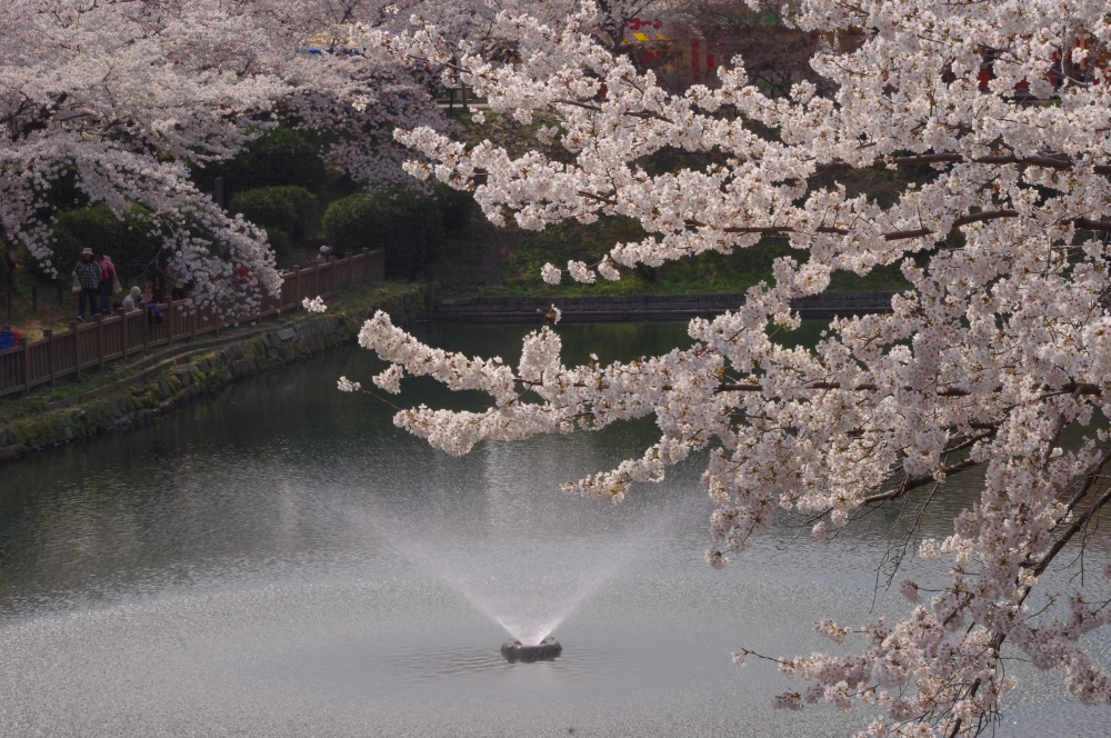 お堀と噴水と桜