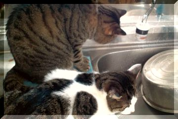 水が好きなレン&ノン3