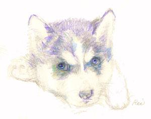 POSTCARD-DOG