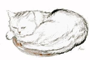 POSTCARD-CAT.jpg