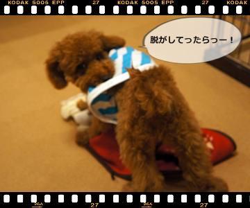 20111105_clothes6.jpg