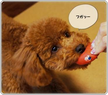 20111119_egg2.jpg