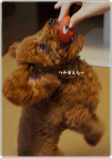 20111119_egg4.jpg