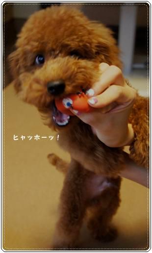 20111119_egg5.jpg
