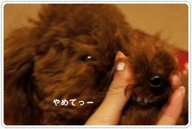 20111130_teeth3.jpg