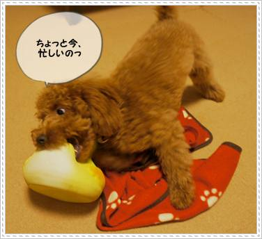201111XX_gako1.jpg