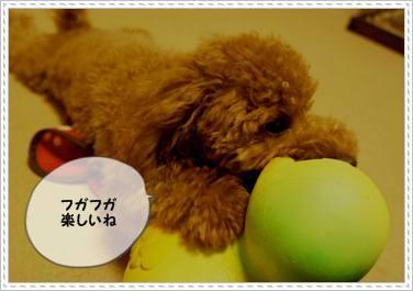 201111XX_gako2.jpg