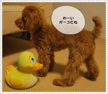 201111XX_gako5.jpg