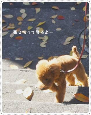 20111217_sanpo1.jpg