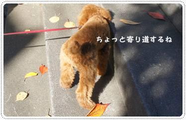 20111217_sanpo3.jpg