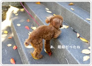 20111217_sanpo4.jpg
