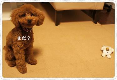 20111219_taicho2.jpg