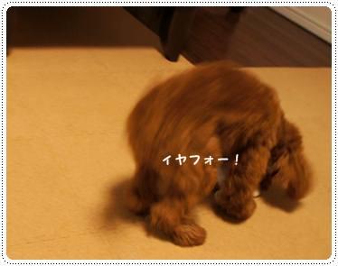 20111219_taicho4.jpg
