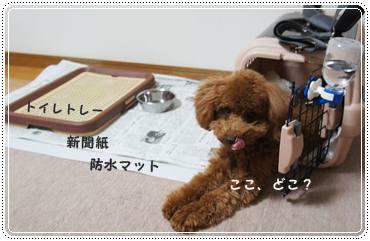 20120102_newyear2.jpg