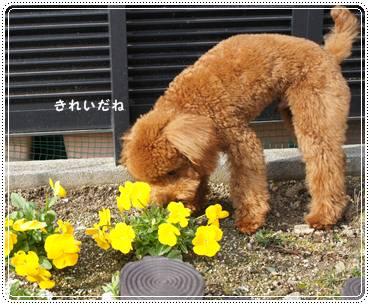 20120102_newyear4.jpg