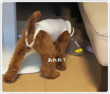 20120121_goinghome4.jpg