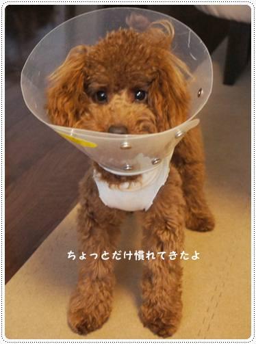 20120123_sugarboy3JPG.jpg