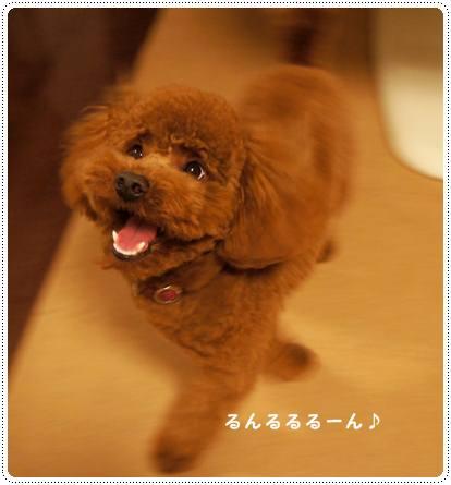 20120206_basshi2.jpg
